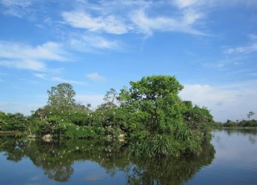 Chi Lang Nam stork island in Hai Duong Province